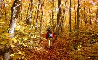 person hiking a trail with fall colours