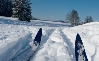 tips of cross-country skis in snow